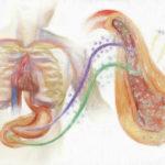 小腸と膵臓はつながっている【インスリン分泌を増やすインクレチン製剤】